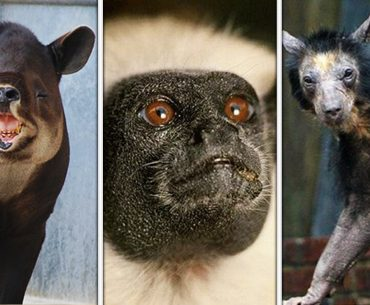 20 Mammals That Are Shockingly Ugly