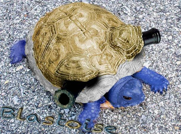 Blastoise Real Life Pokemon Animals