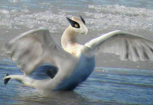 Lugia Real Life Pokemon Animals