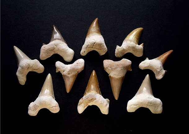 Arrows Crazy Sharks Facts Causing Dropped