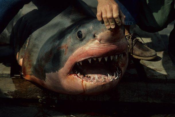 Expensive Dental Bills sharks facts