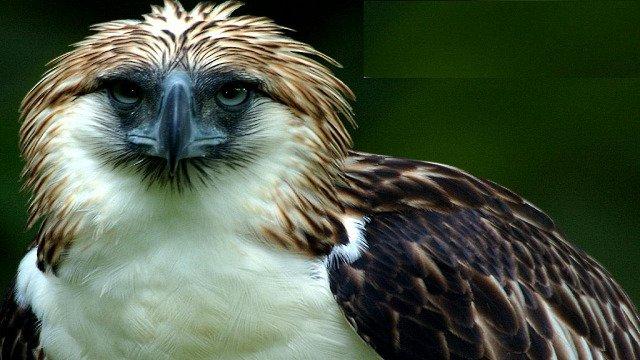 Animal with the sharpest eyesight superlatives in nature