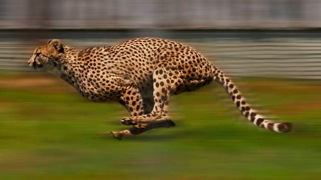 Fastest running animal funny superlatives
