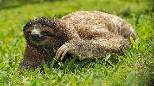 Slowest Animal