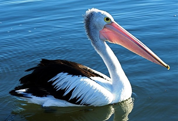 Pelican oldest plant species