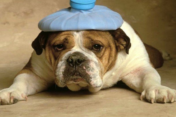 Sick as a dog idiom examples for kids