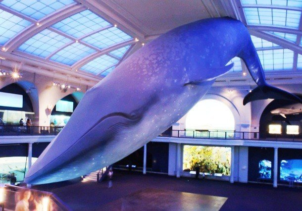 Blue whale pictures of animals and their body parts