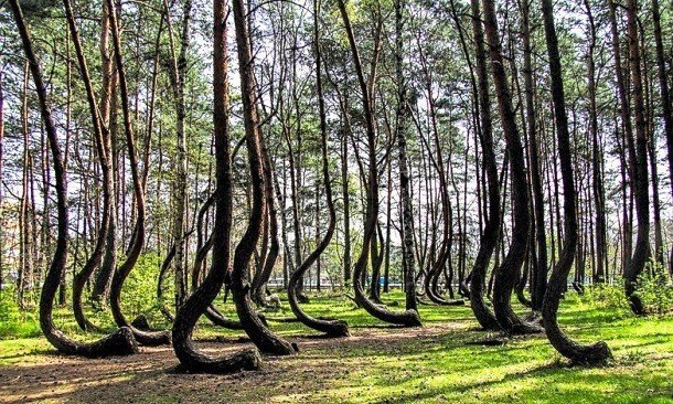 Crooked Forest, Poland Hidden Tourist Attractions In The World