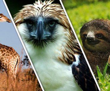 Animal Superlatives