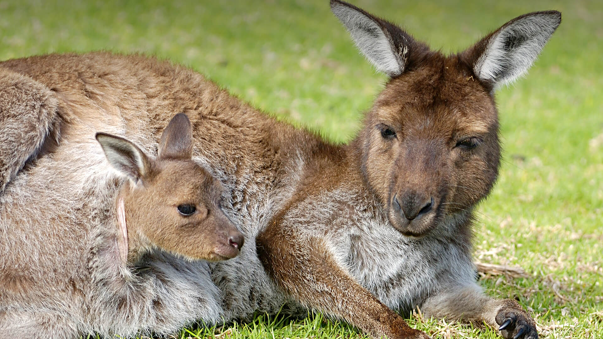True Facts About Marsupials Human And Animals Relationship