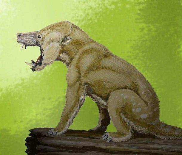 Arctocyon