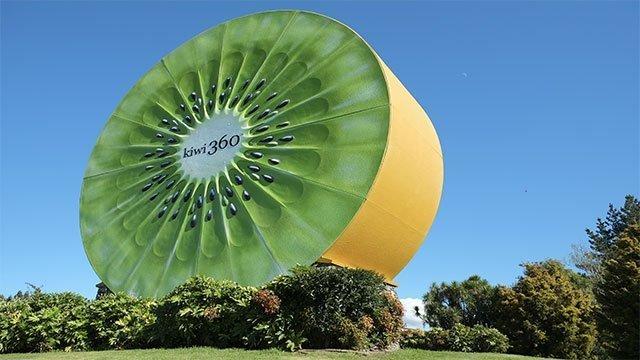 The World's Largest Kiwi Fruit (New Zealand)